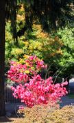 14th Oct 2013 - More Colour in Tualatin