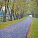 Autumn Avenue by alophoto