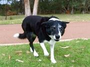11th Aug 2009 - More Dog Walking