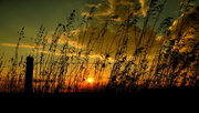 18th Oct 2013 - Fence line sunset