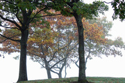 18th Oct 2013 - Foggy Morning at the Park