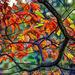 Sassaras Leaves by skipt07