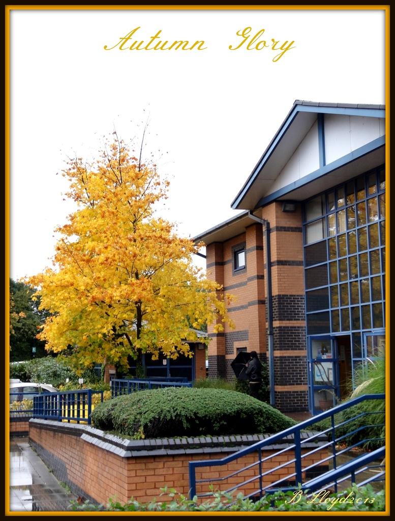 Autumn Glory  by beryl