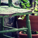 Garden life by nicolecampbell