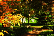 22nd Oct 2013 - Cemetery on a sunny afternoon