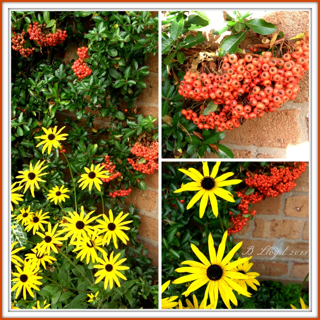 Colourful October by beryl
