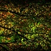 Night Light by peggysirk