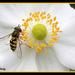 Bee by vernabeth