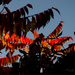 Autumn Light by tonygig