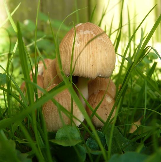 In my garden by lellie