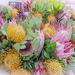 Proteas by salza