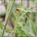 Bugs Life by kazlamont