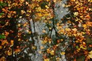 28th Oct 2013 - Rainy afternoon in autumn