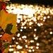 Autumn Glimmers by sbolden