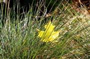 27th Oct 2013 - Splendor in the Grass