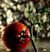 29th Oct 2013 - Tomato