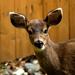 Bambi by nanderson