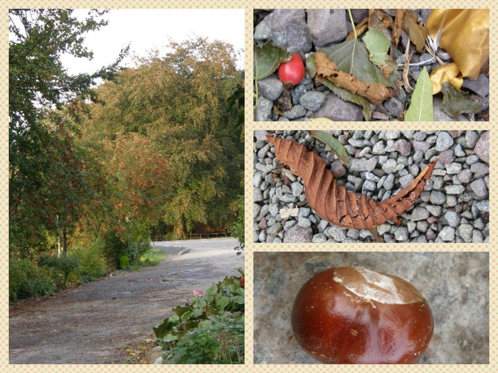 Scenes of October  by beryl