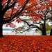 Red Carpet by sbolden