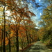 Fall Color Along the Clinch River by calm