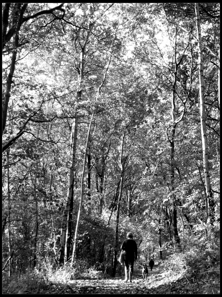 A Walk in the woods (Kodak T-MAX 100) by phil_howcroft