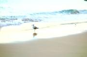 3rd Nov 2013 - The Cascais seagulls...
