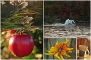 3rd Nov 2013 - Sunday Morning Collage