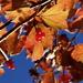 Autumn Sunshine by filsie65