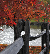 5th Nov 2013 - The Weathered Fence