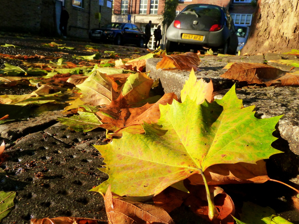 Fallen leaf by boxplayer