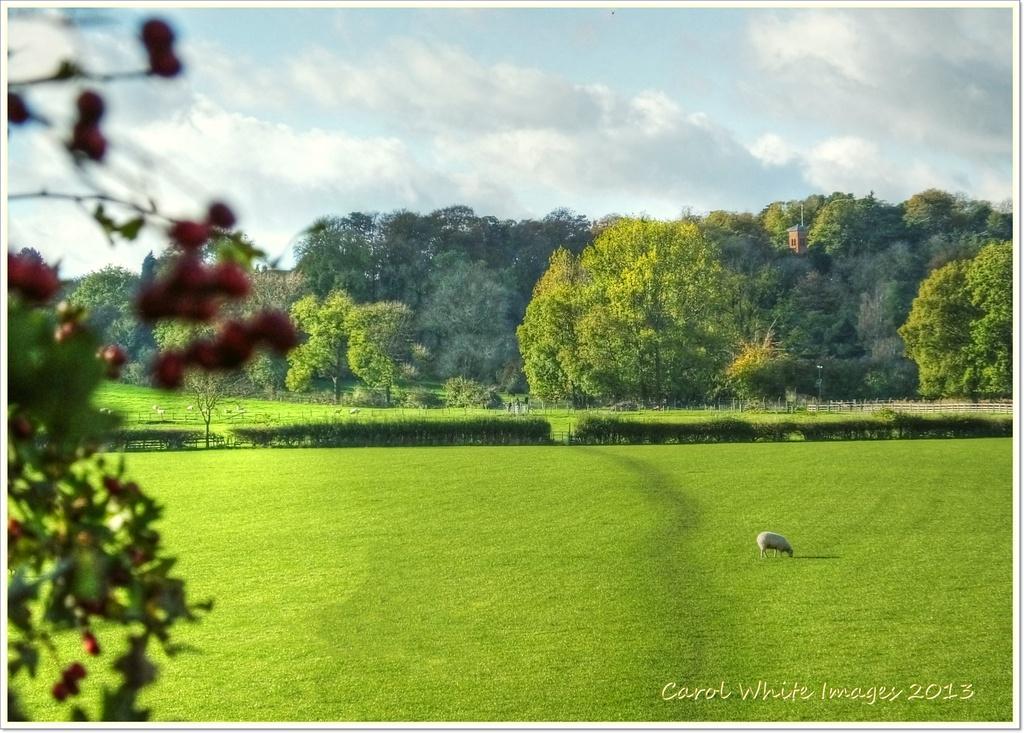 Rural Scene  by carolmw