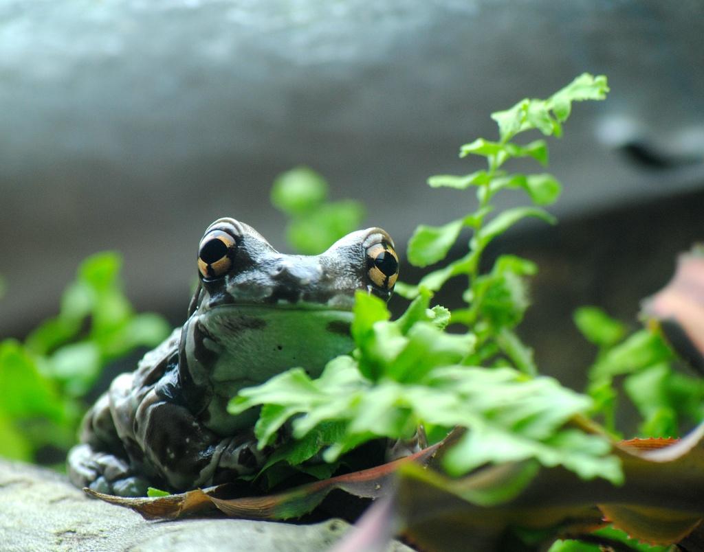 Feeding my Frog Fix by alophoto
