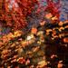 Fall Wall by taffy