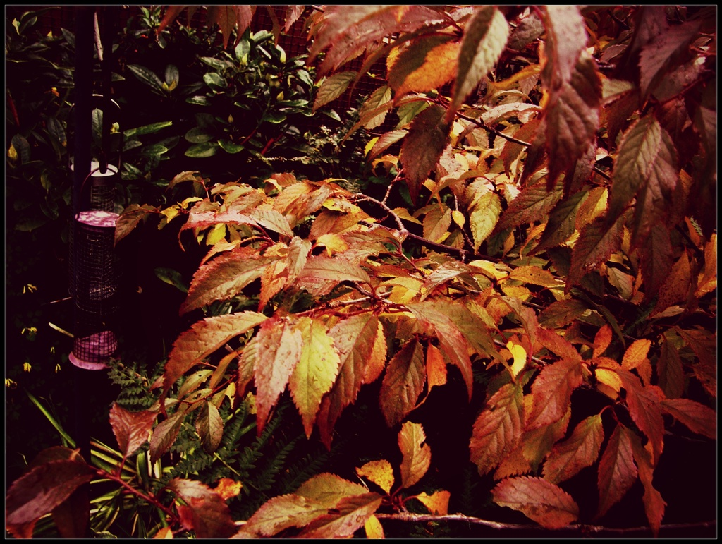 Decidious leaves --still hanging on ! by beryl