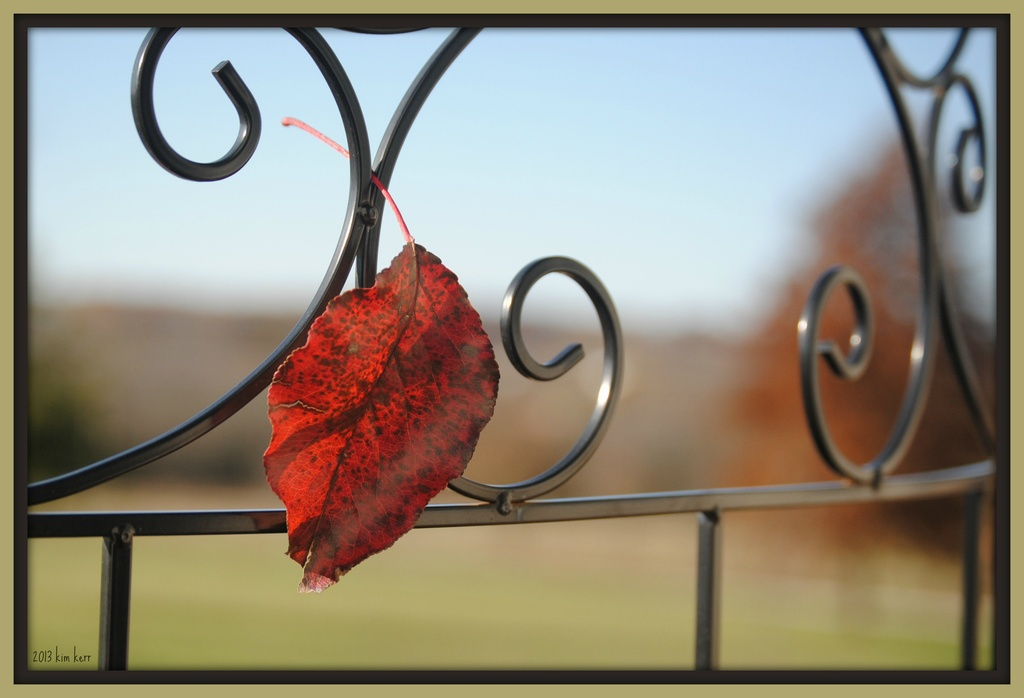 Trapped on the Trellis by genealogygenie