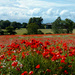 11th November 2013 - We Will Remember by pamknowler