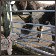 11th Nov 2013 - Give us a kiss then !!