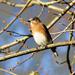 Happy little bluebird by cjwhite