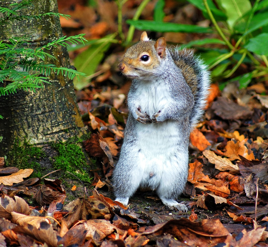 Has Anyone Seen My Nuts? :-) by jesperani