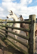 13th Nov 2013 - A rustic ranch fence