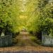 Leafy drive - 13-11 by barrowlane