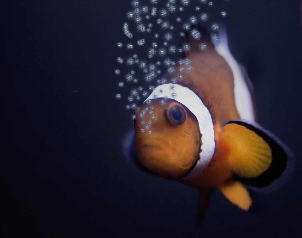 Nemo says Hello by shepherdmanswife