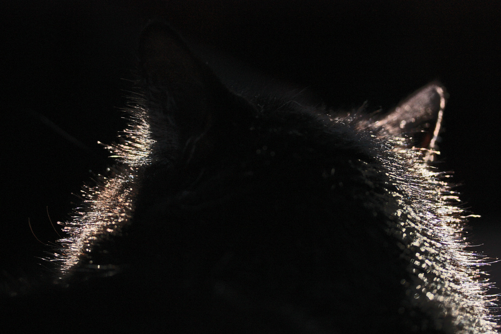Zoe in a Sunbeam by mzzhope