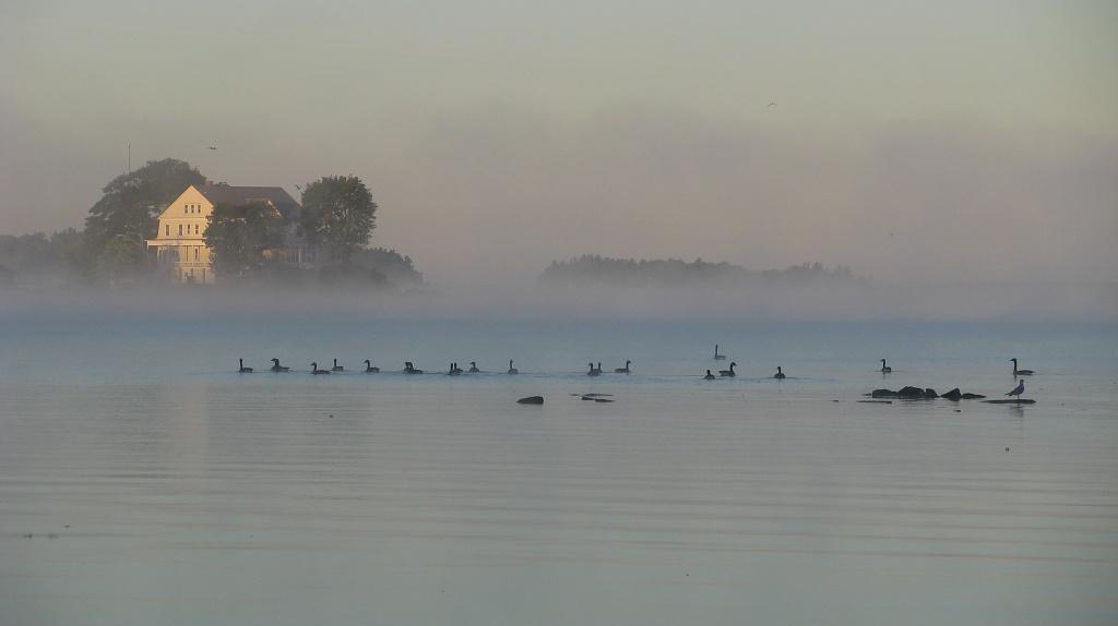 Misty Morning by rrt
