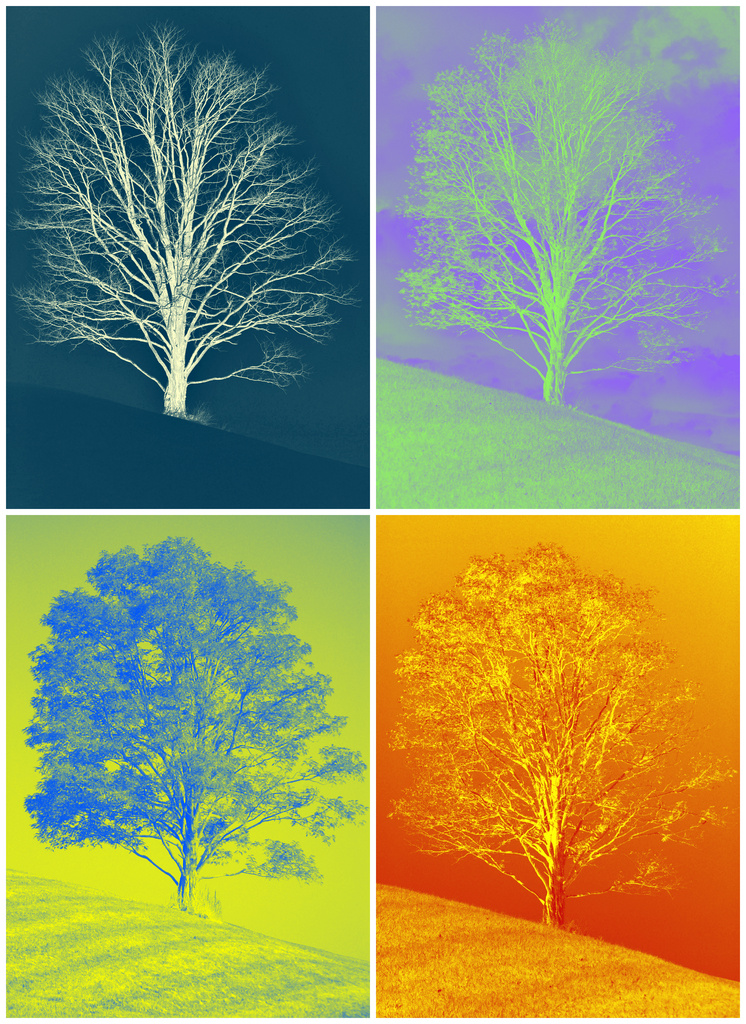 A Year in the Life of One Tree Hill Warhol Style by alophoto