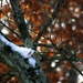 Snow on a limb and some bokeh by mittens
