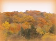 16th Nov 2013 - Autumn splendour....