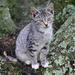 I lichen cats by cjwhite