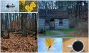 17th Nov 2013 - Sunday Morning Collage