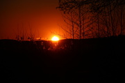 17th Nov 2013 - Burning sun